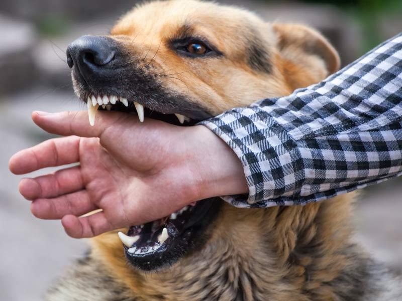 chien-dangereux