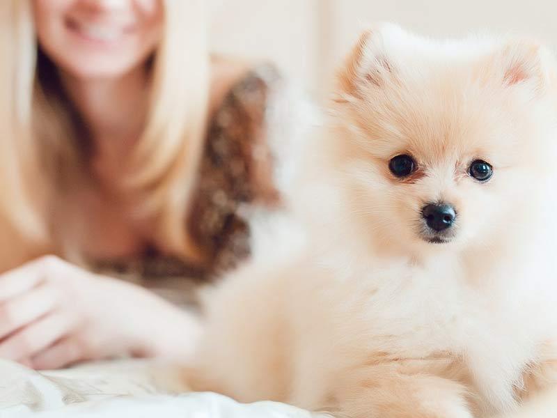 chien-jaloux