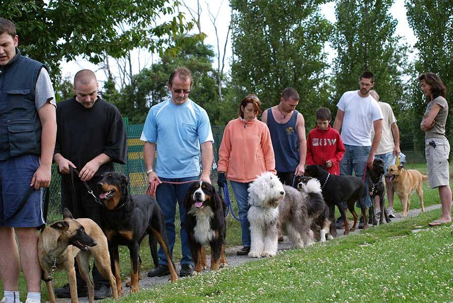 dressage canin à Bondoufle (91)