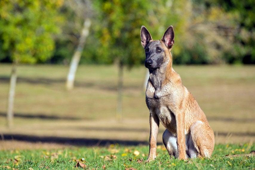 Cours de dressage canin en Essonne