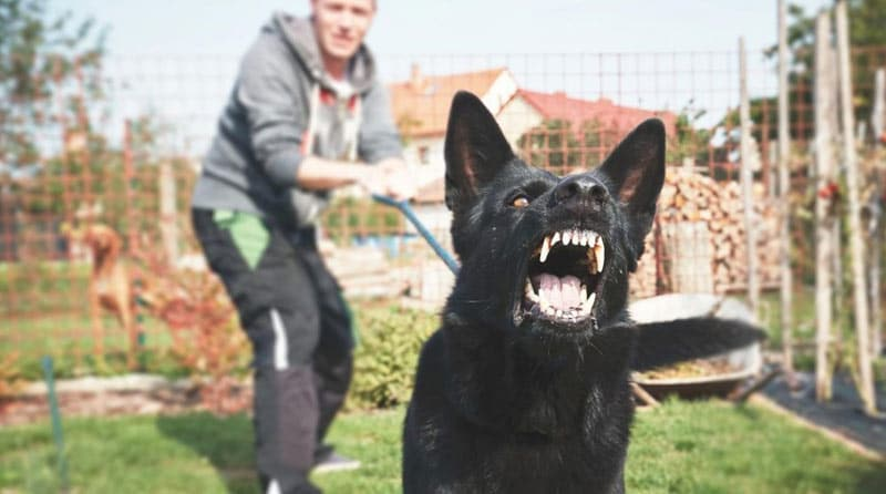 educateur-canin-solution-agressivite